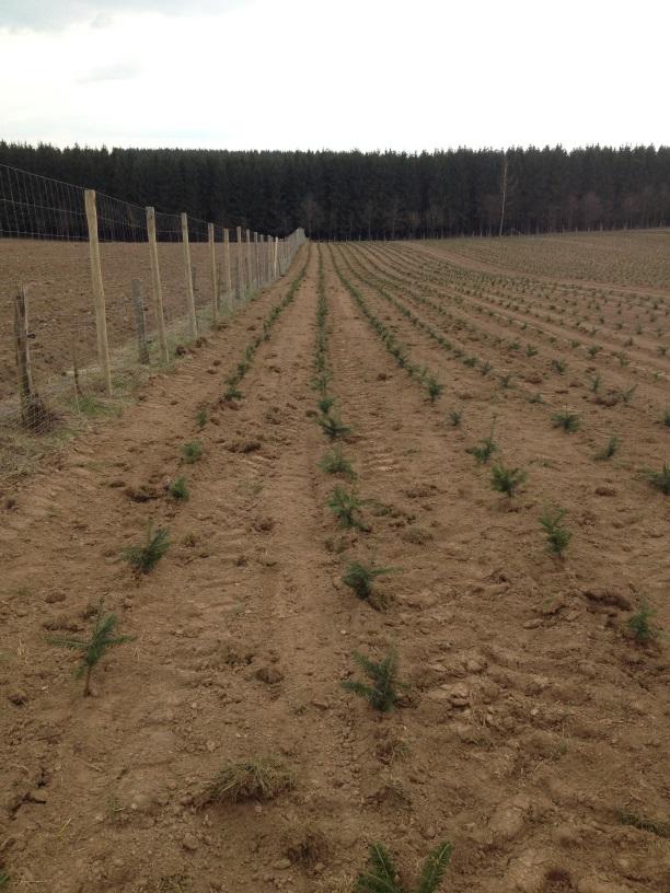 Plantation 2016 - 1